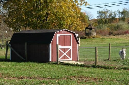 Storage Shed from All Amish Structures